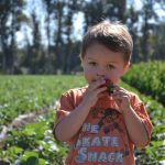 Strawberry Picking at Underwood Farms
