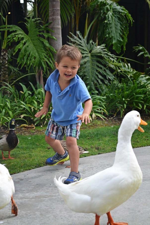 ducks3_edited-1