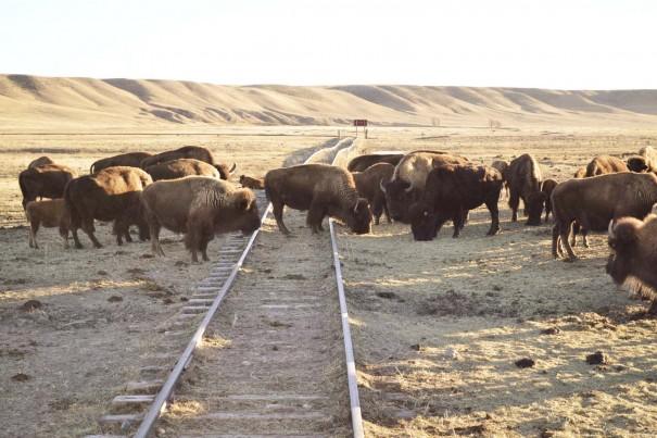 buffalo train tracks