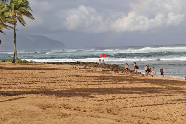 hawaii 49