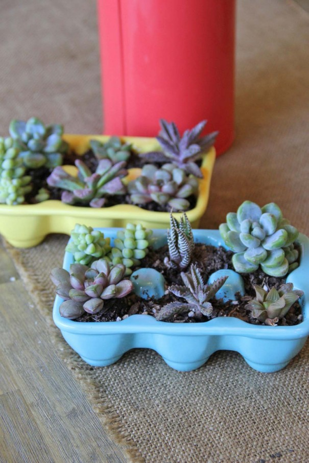 easter succulents