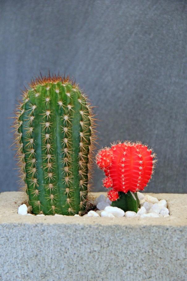 cinder block cacti planters
