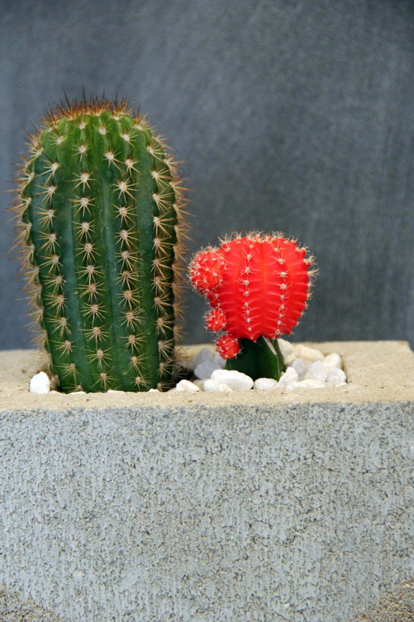 cass shower cacti planter